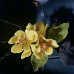 yellowone