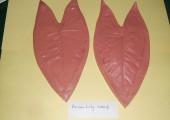 Arum Lily Leaf  ARV 0088