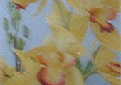 Cymbidi_Flower
