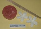 Frangipani   FlowerARV 0092