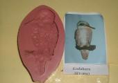 Kookabura ARV-0043