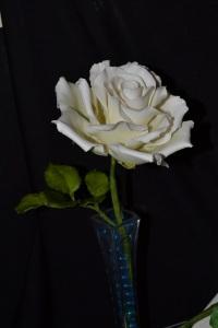 Rose large