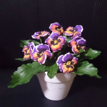 purplepot